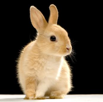 http://www.bestrabbitsites.com/images2/brown-rabbit.jpg